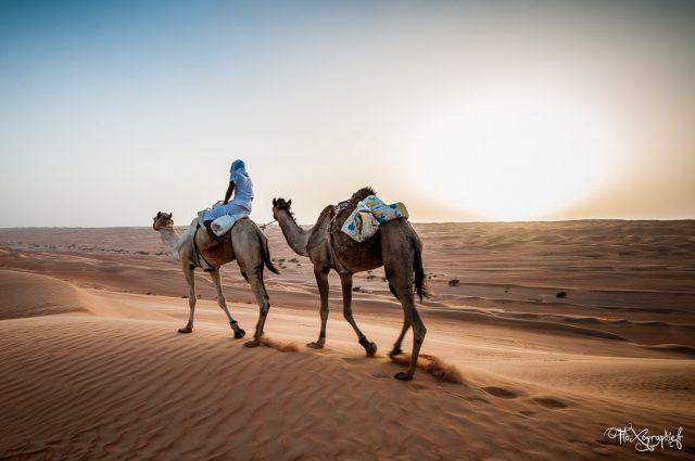 Sultanat d'Oman #2 : Wahiba, le désert de sable