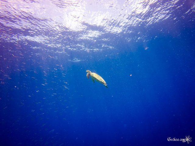 Underwater : les fonds marins en photos