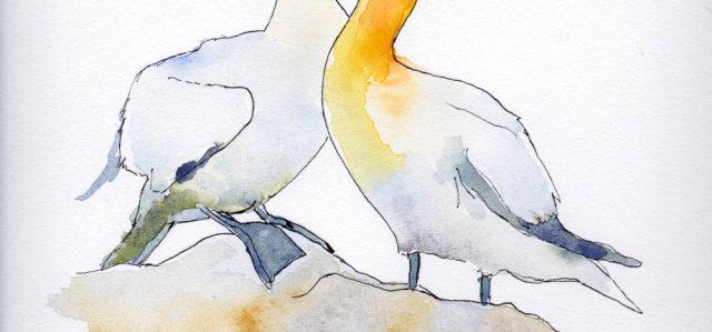 Un oiseau de mer, le fou de Bassan