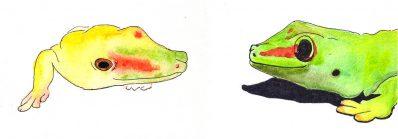 Lézards et Geckos