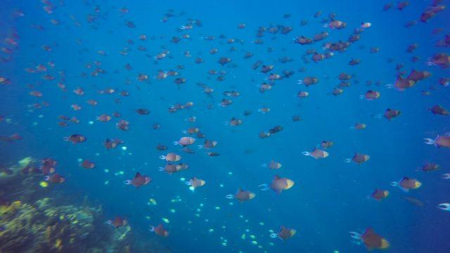 Le monde des poissons #1 : les balistes