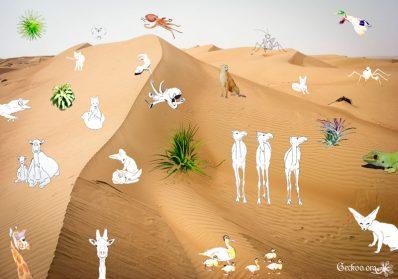 bestiaire en dessins, plantes en photos dans le désert !