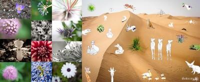 Fleurs et bestiaire de geckoo.org