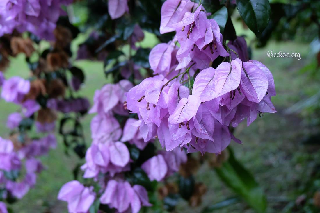 voyage coloré de fleurs tropicales | uneetincelle