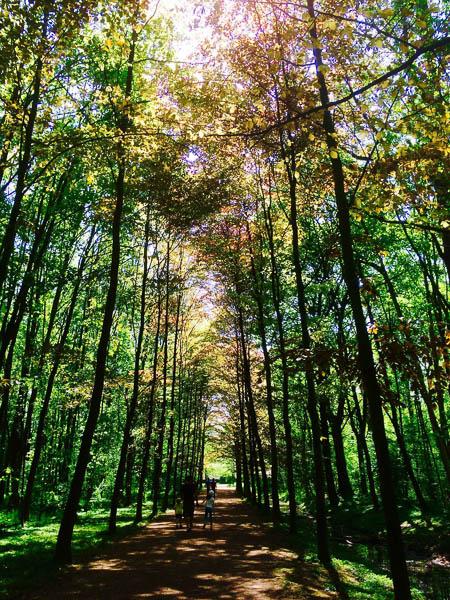 Allée dans la forêt