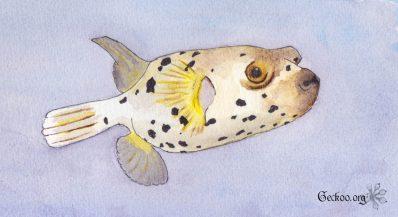 Le monde des poissons #2 : les poissons gonflés !