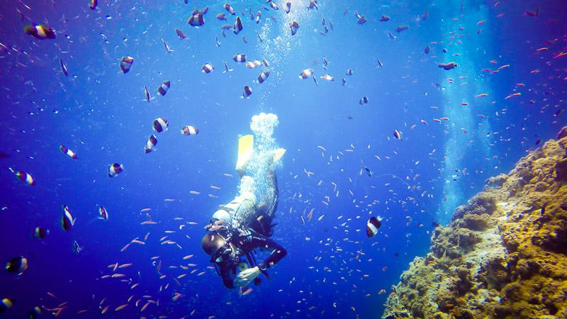 plongeur au milieu des poissons