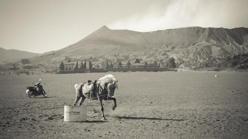 cheval énervé au Mont Broma à Java en Indonésie