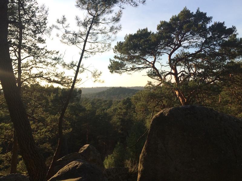 Arbres et forêt