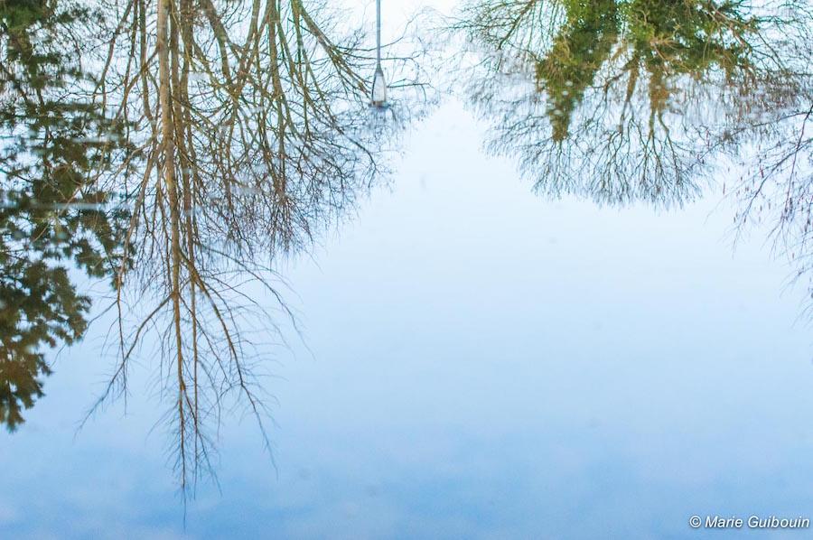 Reflet végétal dans l'eau