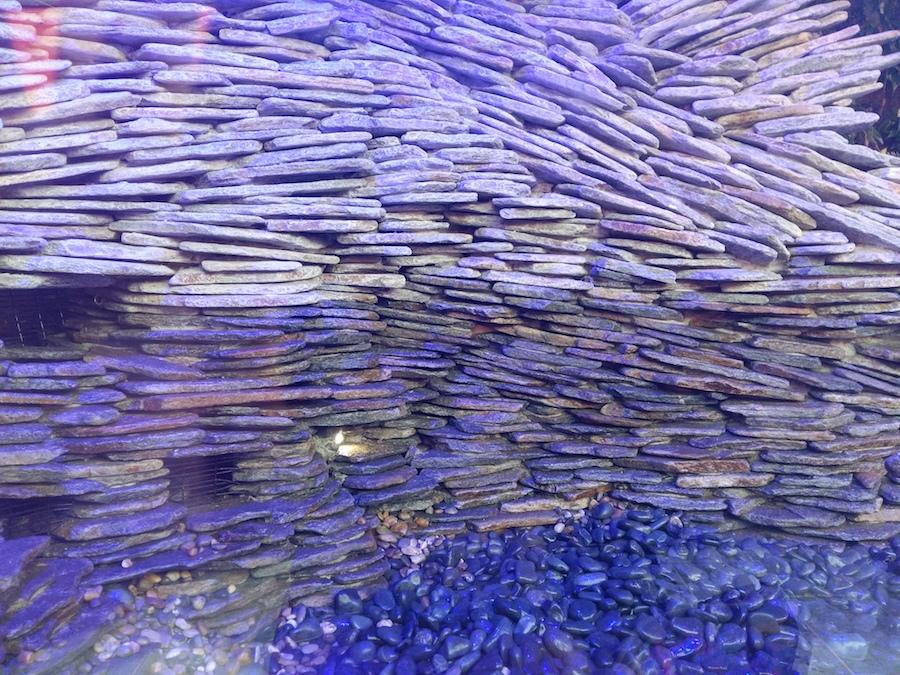 pierres violettes au sol