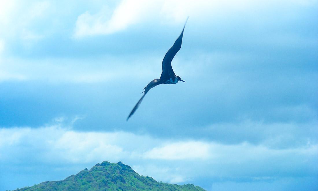 oiseau en vol, plane