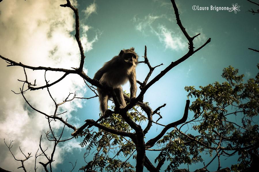 macaque sur son arbre regardant d'en haut