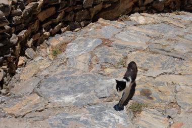 Chat de Chozoviotissa - Amorgos - Cyclades - Grèce