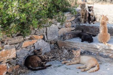 Groupe de chats de Katapola - Amorgos - Grèce