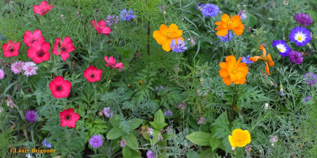 Prairie en fleurs