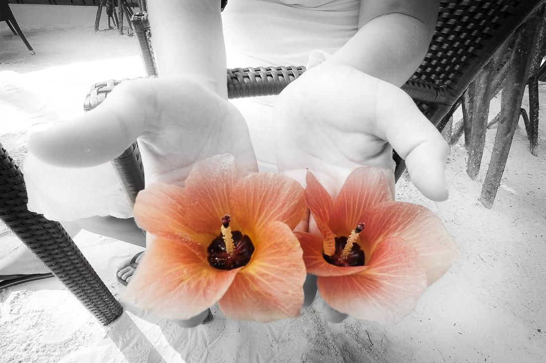 Mains tendus tenant chacune une fleur d'Hibiscus