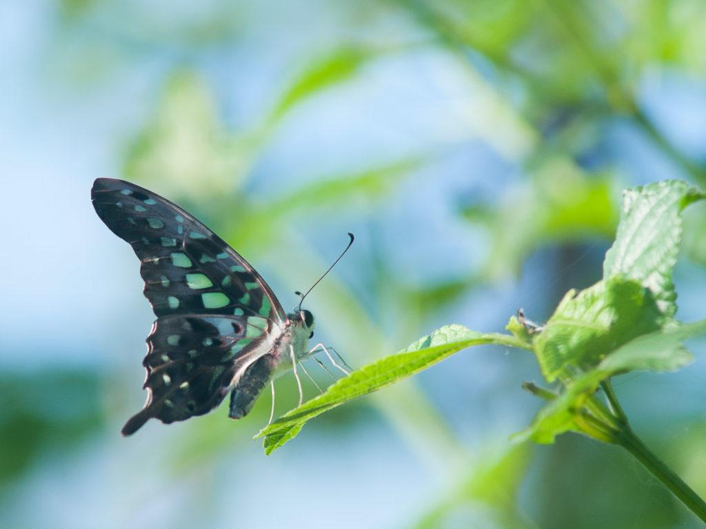 Le papillon : énergie de la transformation et de l'équilibre !