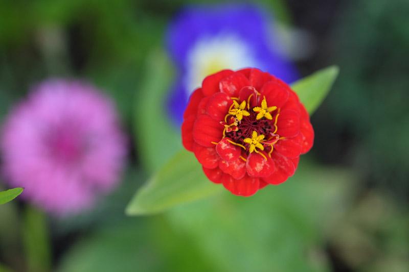 Une fleur d'action pour oser se lancer !