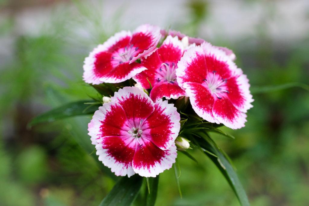 Un bouquet de joie en fleurs rouges et blanches pour illuminer ta journée !