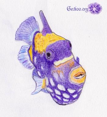 Dessin de baliste clown aux crayons de couleurs - Balistoides conspicillum