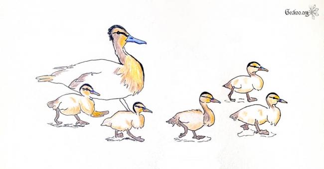 Dessin d'une famille canard, feutre et crayons de couleur
