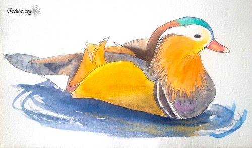 Dessin de canard mandarin au feutre et aquarelle