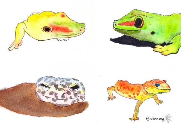 gecko feutre et aquarelle