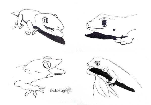 gecko au feutre