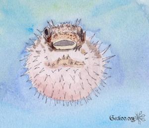 Dessin de Diodon hystrix gonflé aquarelle et feutre