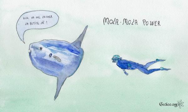Dessin d'un Mola-mola et d'un plongeur aquarelle et feutre