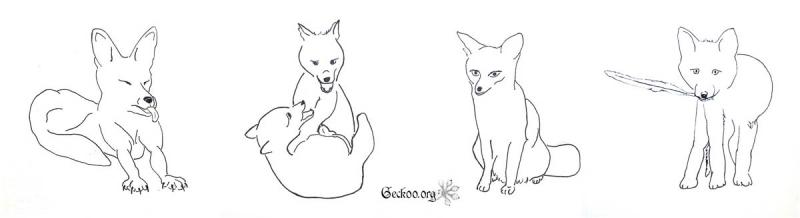 renard au feutre