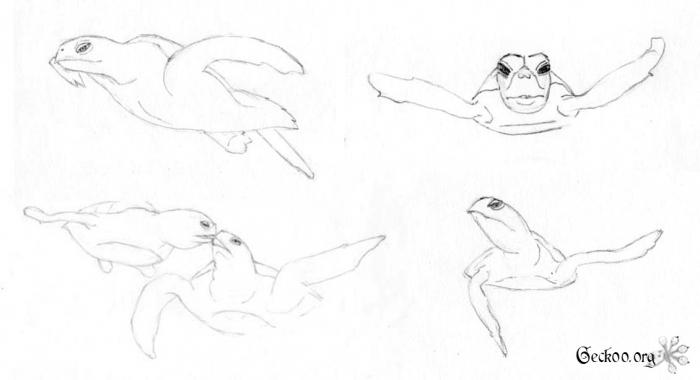 dessins de tortues de mer au crayon