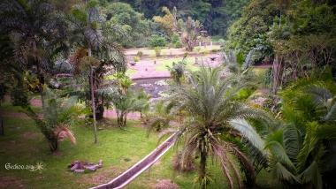 Vue du jardin botanique de Bogor, Java, Indonésie