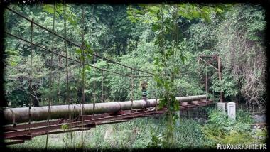 Un des pont du jardin botanique de Bogor, Java, Indonésie