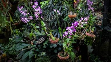La serre des orchidées au jardin botanique de Bogor, Java, Indonésie