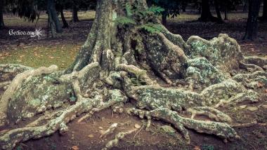 Les racines d