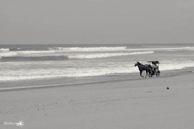 chevaux sur la plage à Parangtritis, Java, Indonésie