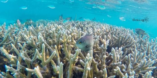 banc de corail et petits poissons