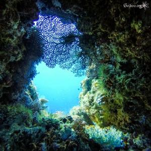 trou de rocher et corail