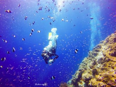 plongeur descendant au milieu des poissons