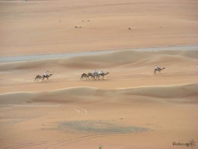 Course de dromadaires à Wahiba Sands