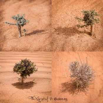 les petits arbustes de Wahiba Sands