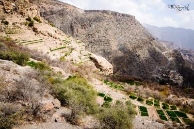 terrasses à Jabal al Akhdar