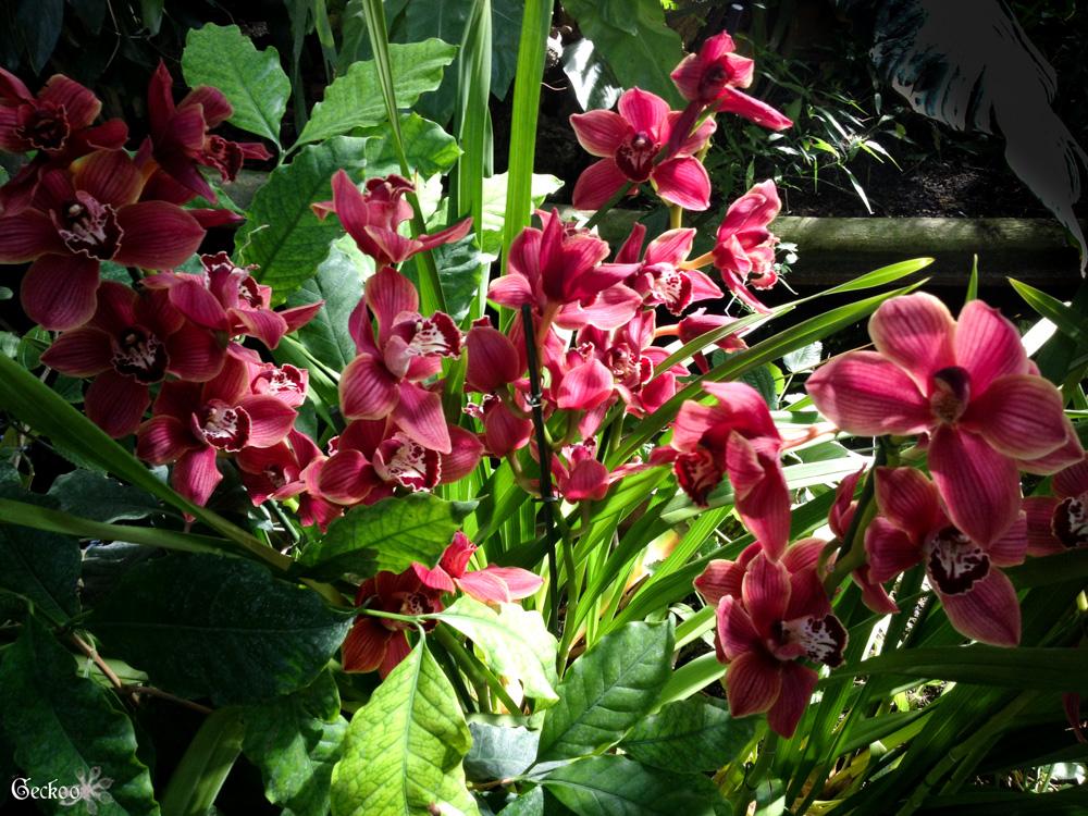 Orchid es au jardin des plantes uneetincelle for Au jardin des plantes