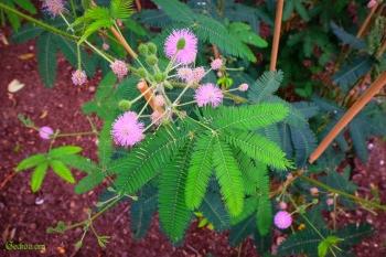 Branche fleurie d