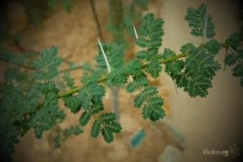 Branche avec épines d