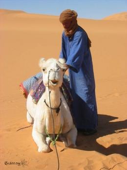 Mussa, notre chamelier - désert de Libye