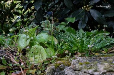 Différentes plantes sur le muret s