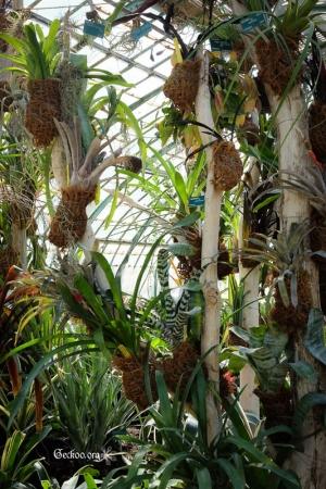 La serre des Bromeliaceae des Serres d
